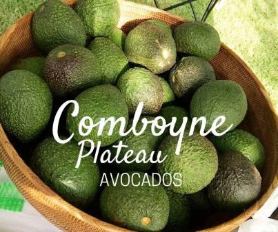 comboyne-avocados-2016